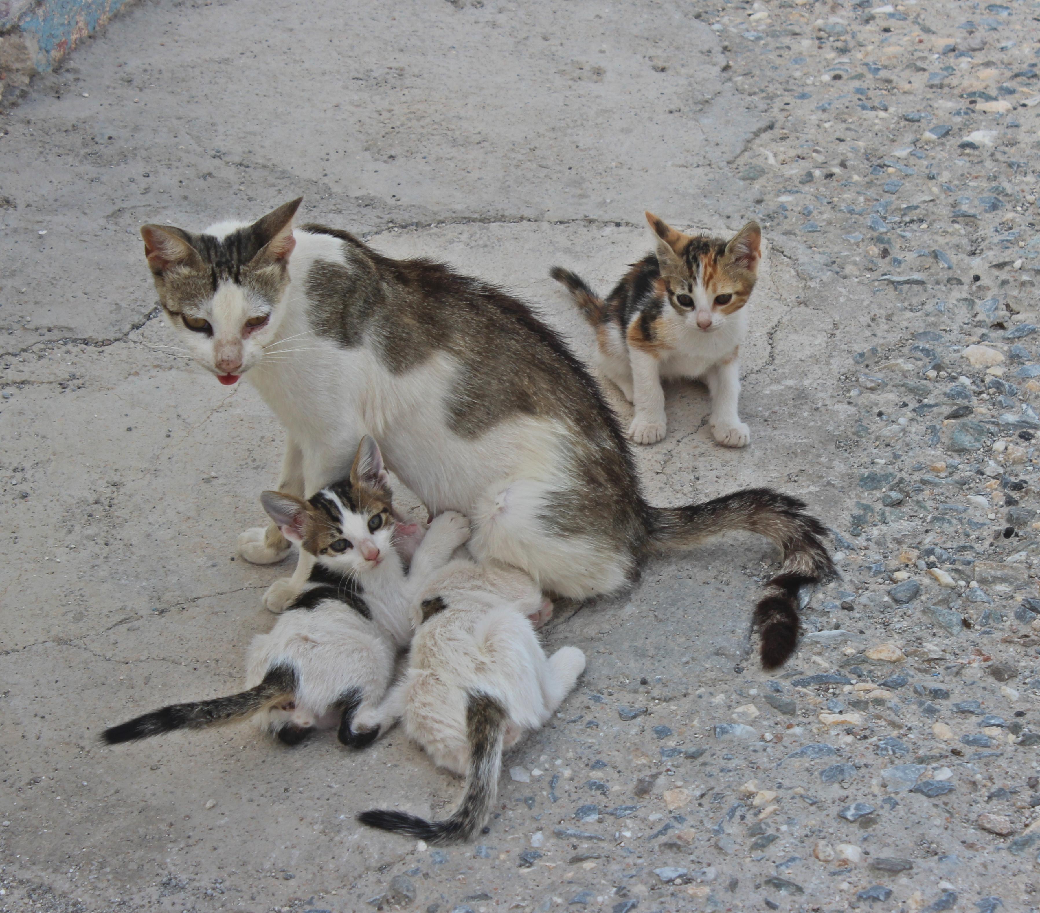 Los gatos de Grecia – Retales del Mundo