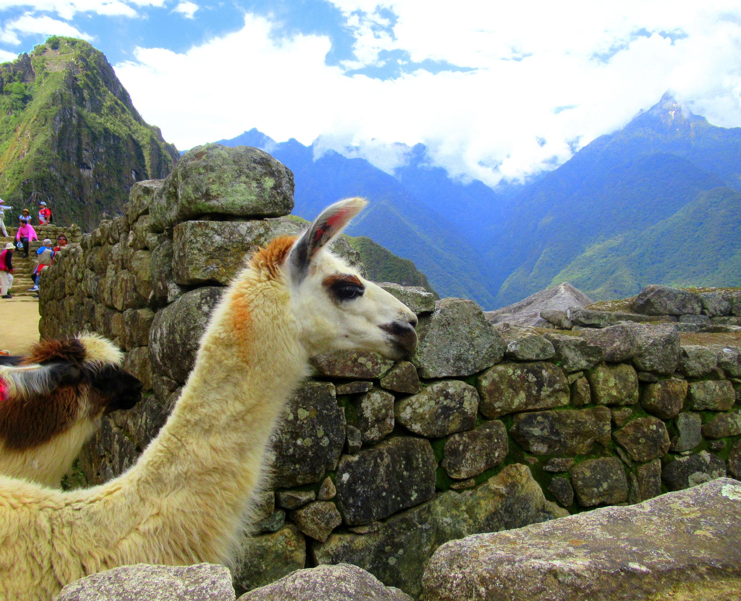 Cómo llegar a Machu Picchu